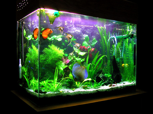 Richards' fish tank