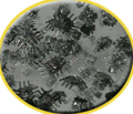 Thumbnail for version as of 11:00, 2 September 2015